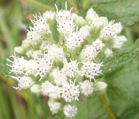 another-white-flower-closeup.jpg