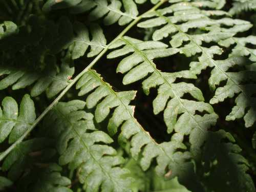 fern-in-light-and-shadow.jpg