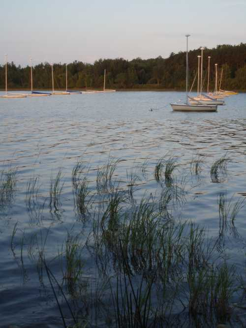 reeds-and-sailboats-at-dawn.jpg