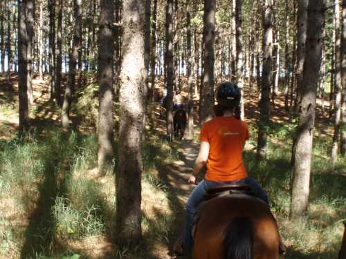 riding-through-pines.jpg