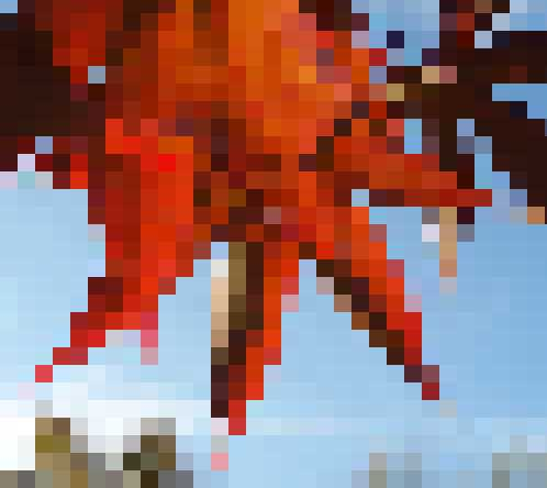 maple-pixelated.jpg