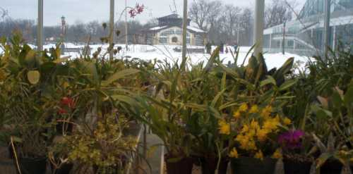 orchids-inside-snow-outside.jpg