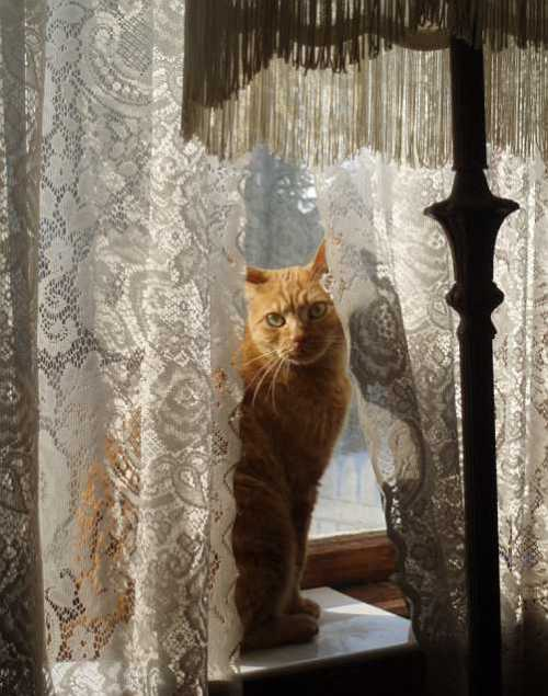 victorian-cat-in-the-window.jpg